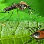 Bugs That Bite: How to Combat Mosquitoes and Ticks This Summer @ The Other Barn | Columbia | Maryland | United States